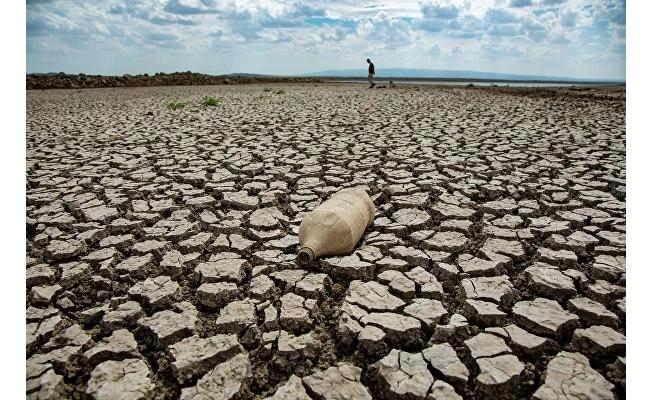 Baraj suları çekildi, canlı türleri bir bir yok oluyor