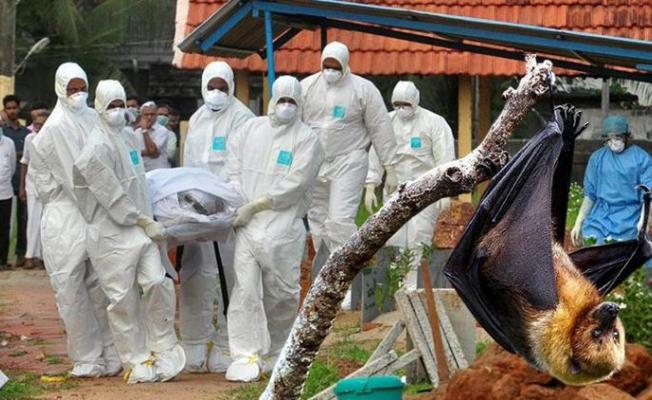 Koronavirüs bitmeden yeni salgın: 12 yaşındaki çocuk, yarasa kaynaklı Nipah virüsü yüzünden hayatını kaybetti