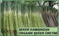 Şeker Kamışından Organik Şeker Üretimi