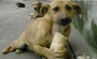 Sokak Hayvanlarına İşkenceye Hapis Cezası Geliyor