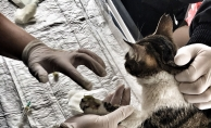 Teleferiğe Sıkışan Kediyi Veteriner Ekipleri Kurtardı