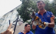 Boruya sıkışan yavru kedi, 5 saatte kurtarıldı!