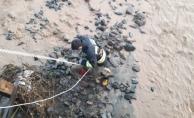 Sel sularının ortasında kalan köpeği kurtarmak için seferber oldular!