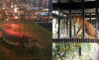Nargile kafe hayvanat bahçesi çıktı!