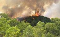 SON DAKİKA ...Antalya'da korkutan orman yangını!