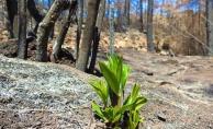 Ormanda umut var... 'Size güzel haberlerim var' diyerek paylaştı